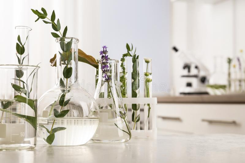 Laboratory glassware with different plants on table. Indoors stock photo