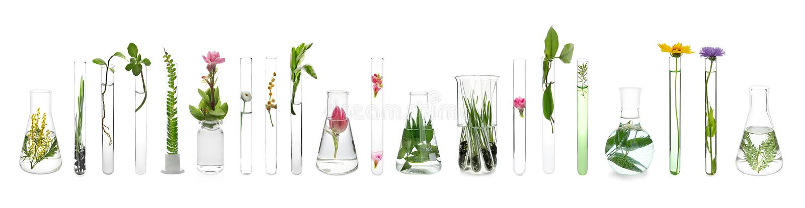 Laboratory glassware with plants on white background royalty free stock image