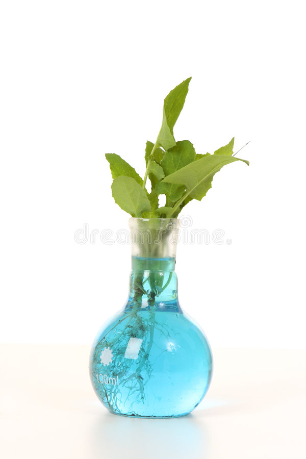 Download Laboratory grown plant stock photo. Image of ecology, horticulture - 6640424