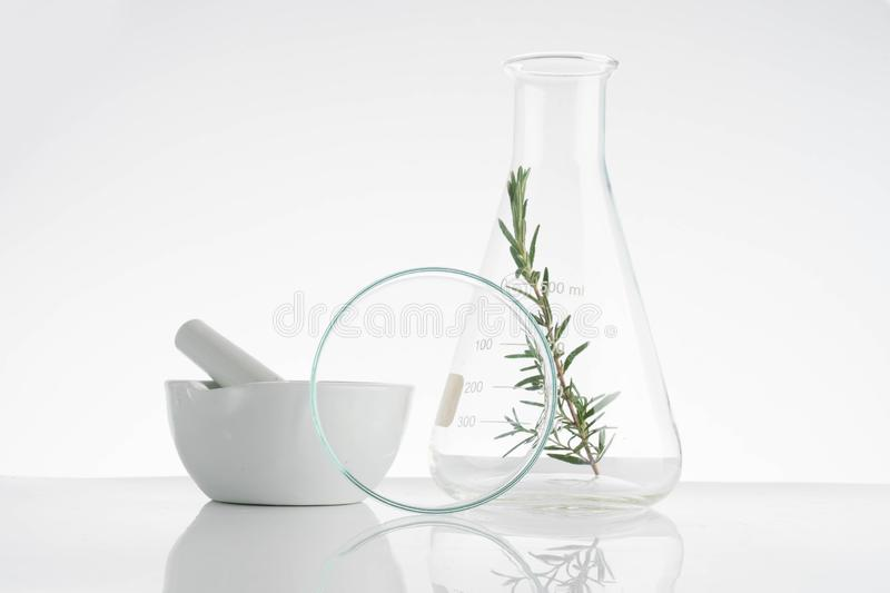 Laboratory and research with alternative herb medicine. Natural skin care stock photo