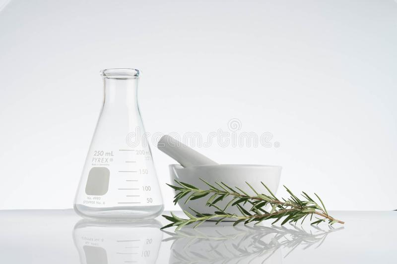 Laboratory and research with alternative herb medicine. Natural skin care royalty free stock photography