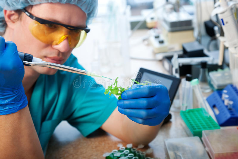 Laboratory test. Scientist with green plant in modern laboratory stock image