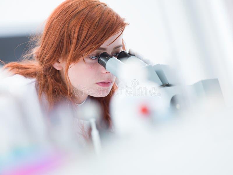 Laboratory Under Microscope Analysis Stock Photo