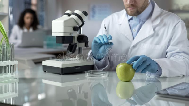 Laboratory worker holding syringe with chemical liquid for injection in apple stock photography