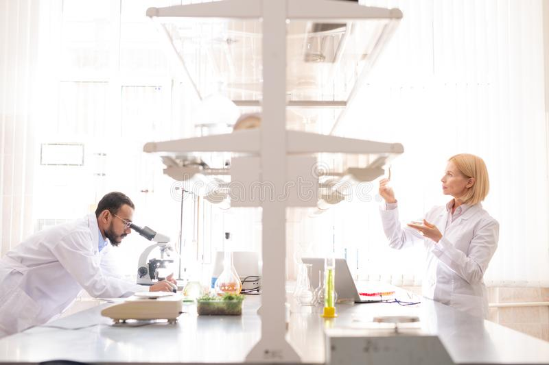 Laboratory workers analyzing samples. Serious busy laboratory workers in white coats standing at desk and analyzing samples while working in environmental royalty free stock image