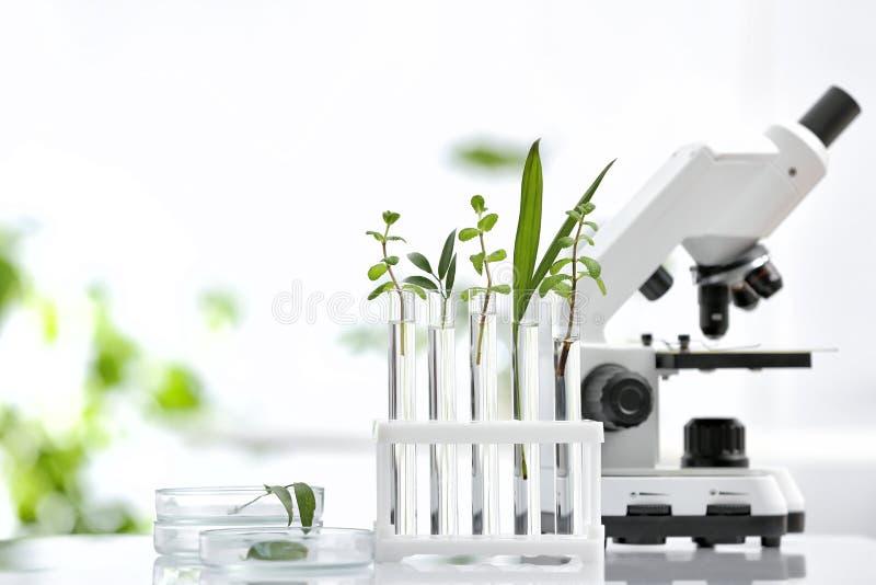 Laborglaswaren mit unterschiedlichen Anlagen und Mikroskop auf Tabelle gegen unscharfen Hintergrund, Raum für Text stockfotos