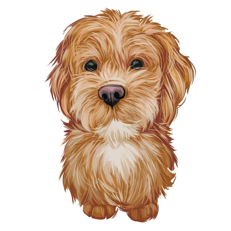 Free Labradoodle Dog Digital Art Illustration Of Cute Canine Animal. Crossbreed Dog Created By Crossing Labrador Retriever Stock Photography - 176893742