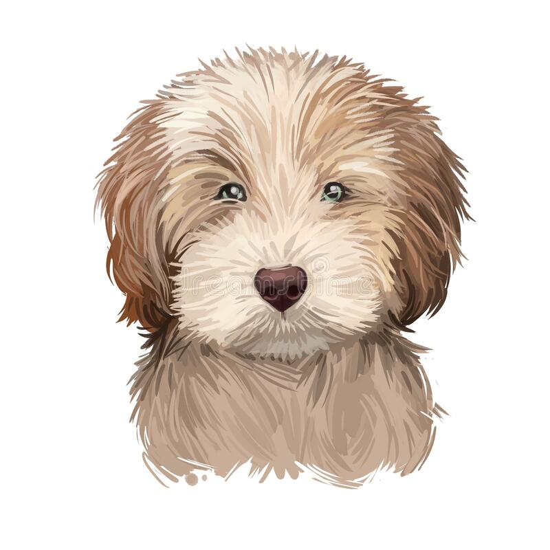 Free Labradoodle Dog Digital Art Illustration Of Cute Canine Animal. Crossbreed Dog Created By Crossing Labrador Retriever And Standard Royalty Free Stock Image - 176828296
