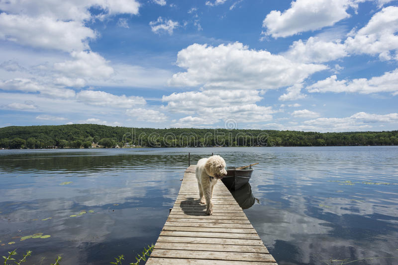 Dog On The Cottage Dock Royalty Free Stock Photography