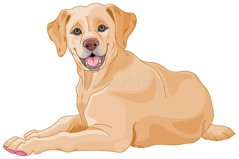 Labrador stock illustrationer