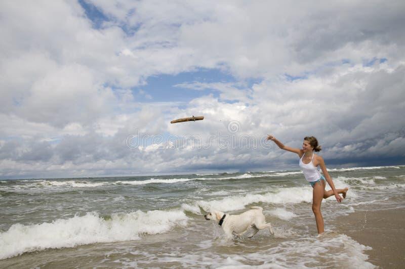Labrador-Apportierhund, der auf dem Strand spielt. stockfoto
