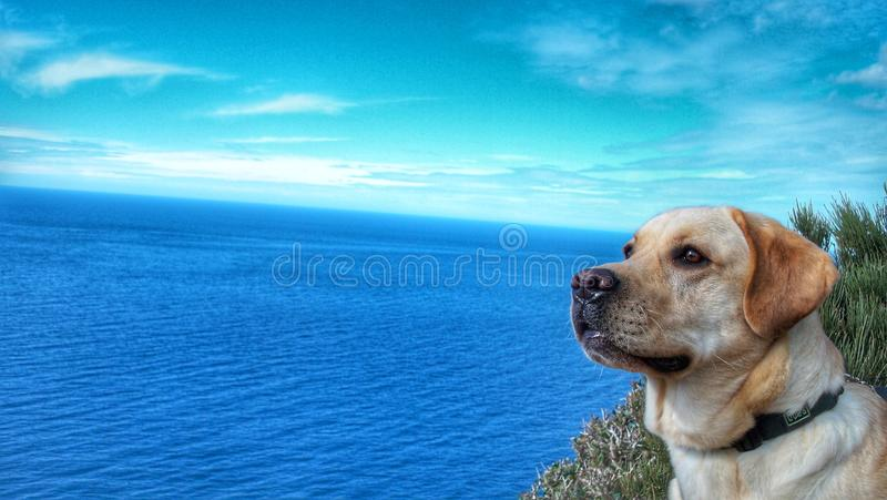 Dog and sea stock photos