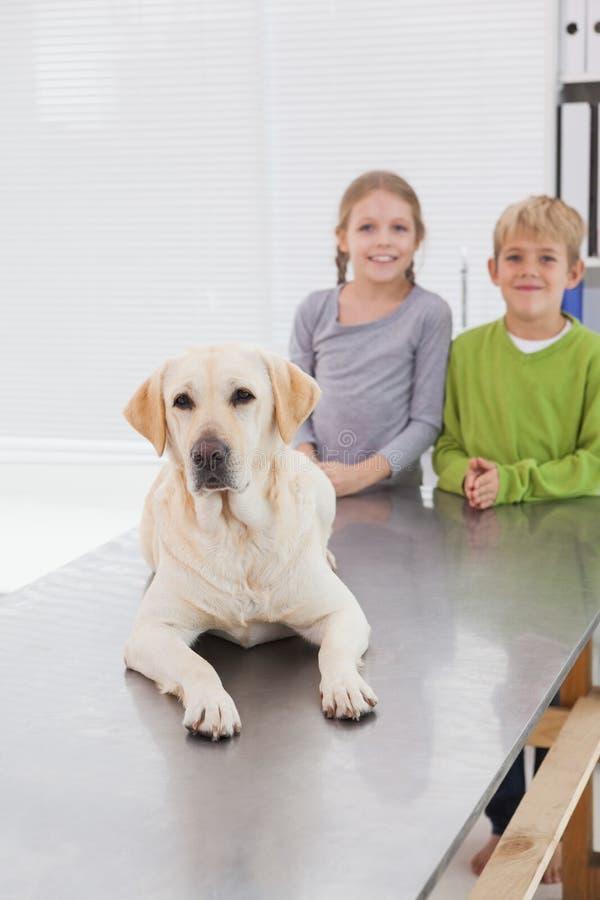 Labrador bonito com seus proprietários felizes foto de stock