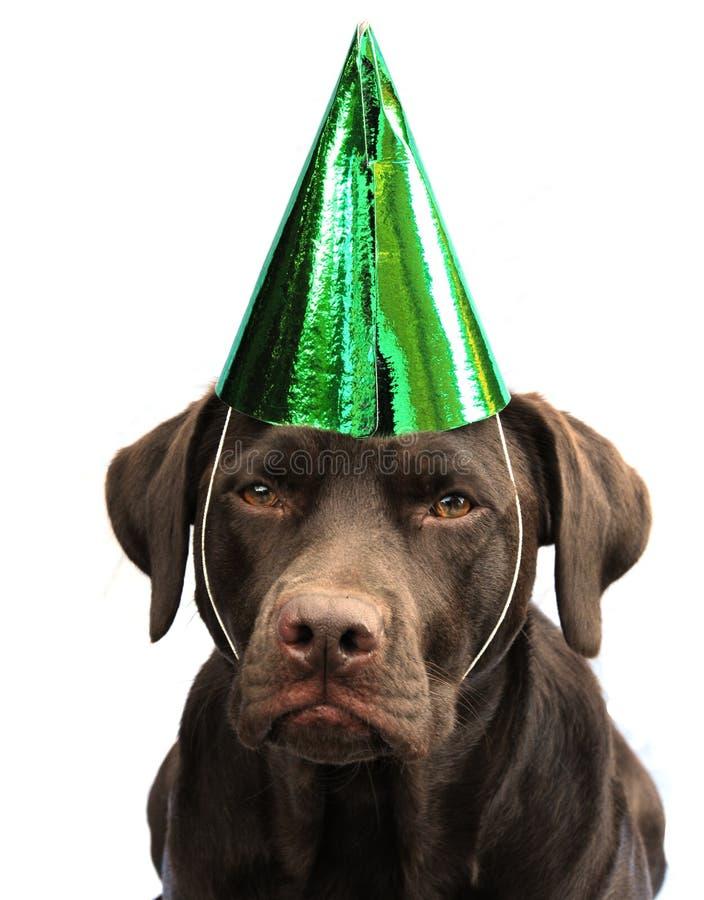 Labrador in cappello del partito immagini stock