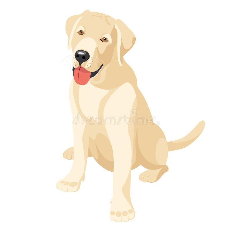 Labrador (chien D Arrêt) Images libres de droits