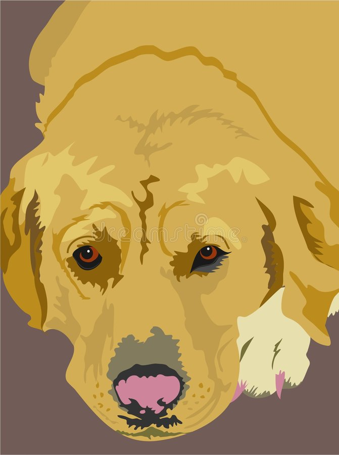 Labrador dourado ilustração stock