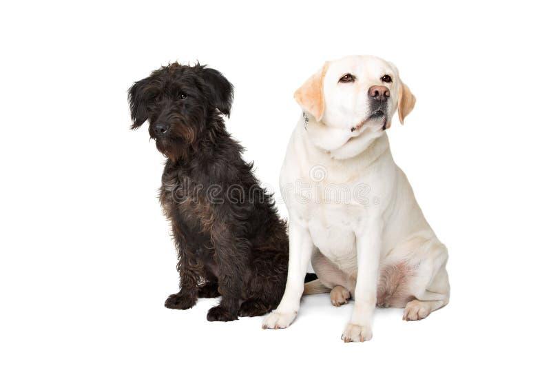 Labrador en een zwarte pluizige hond royalty-vrije stock afbeelding