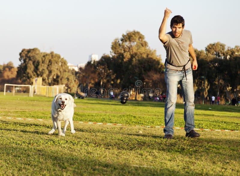 Labrador och instruktören med hundtuggningleksaken på parkerar arkivbild
