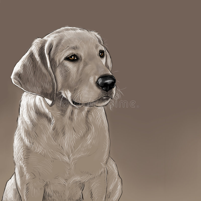 Labrador Retriever royalty free illustration