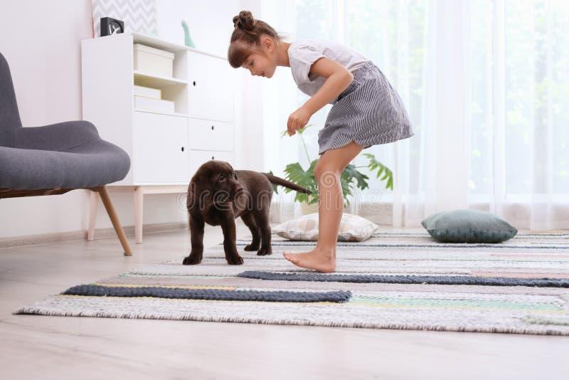 Labrador retriever adorable del chocolate y poco gir imagenes de archivo