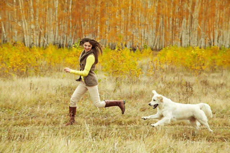 Labrador retriever com proprietário fotografia de stock