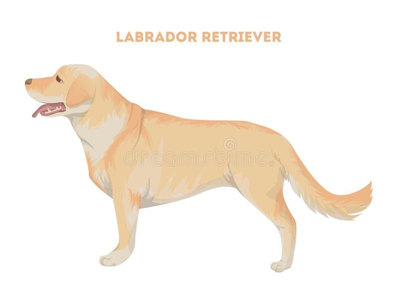 Labrador retriever d'isolement illustration libre de droits