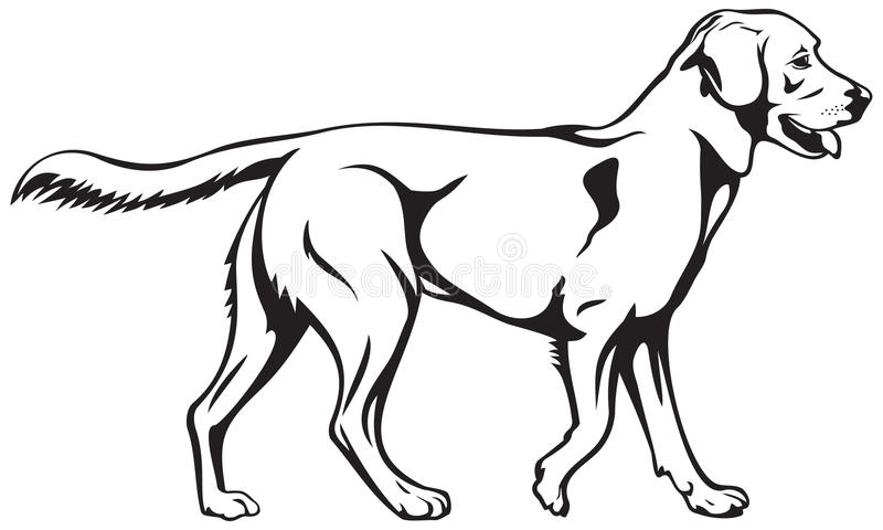 Labrador retriever dog breed. Vector illustration, gun dog, assistance dog, dog show sign symbol set