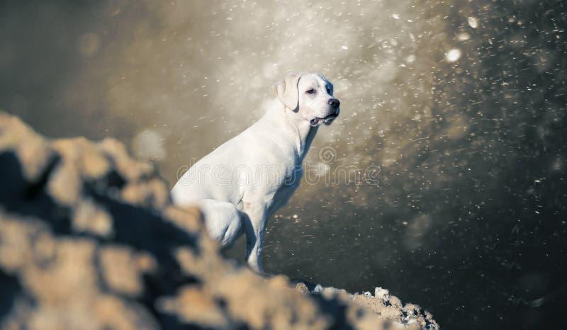 Labrador retriever jest prześladowanym szczeniaka na wzgórzu - abstrakcjonistyczny burzowy tło obraz royalty free