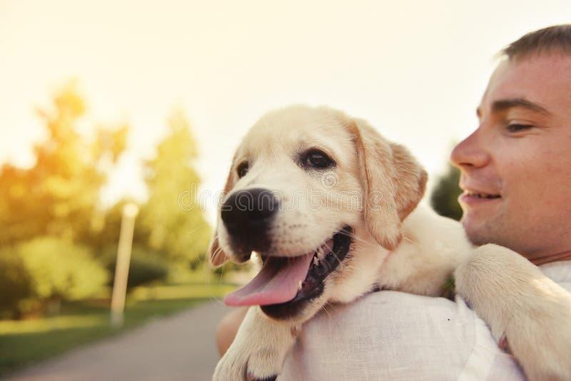 Labradorvalp i händerna av ägaren royaltyfri fotografi