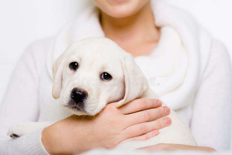 Labradorvalpen sitter på händerna av kvinnan fotografering för bildbyråer