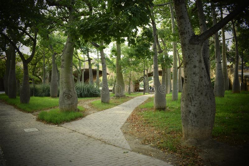 Labyrinth of trees stock photo