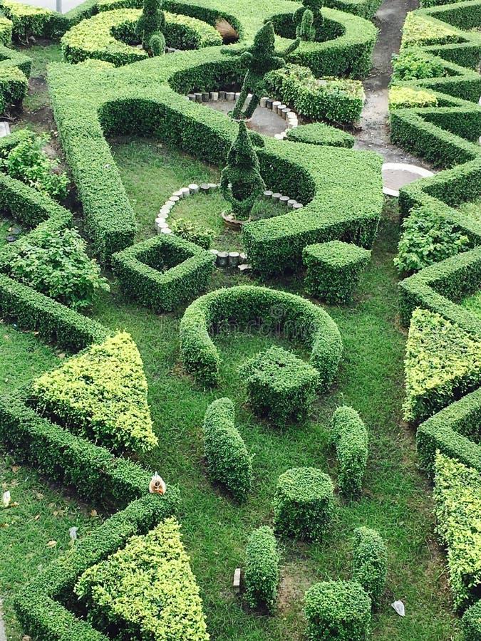 Labyrinthbaum lizenzfreie stockfotos