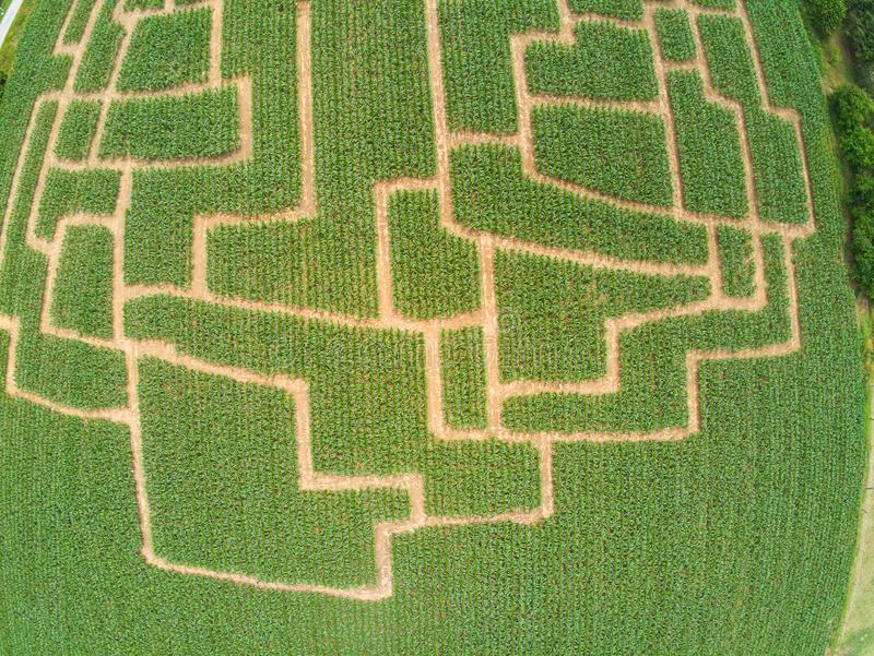 Labyrinthe d'événement dans le champ de maïs à Brno-Komin de République Tchèque ci-dessus et photographie stock