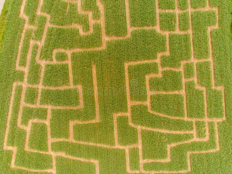 Labyrinthe d'événement dans le champ de maïs à Brno-Komin de République Tchèque ci-dessus et image libre de droits