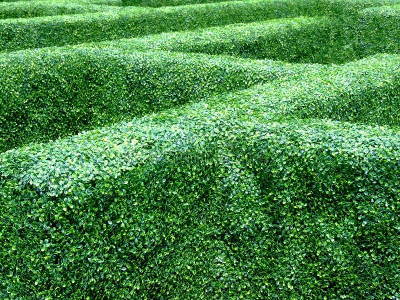 Labyrinthe de jardin photos libres de droits
