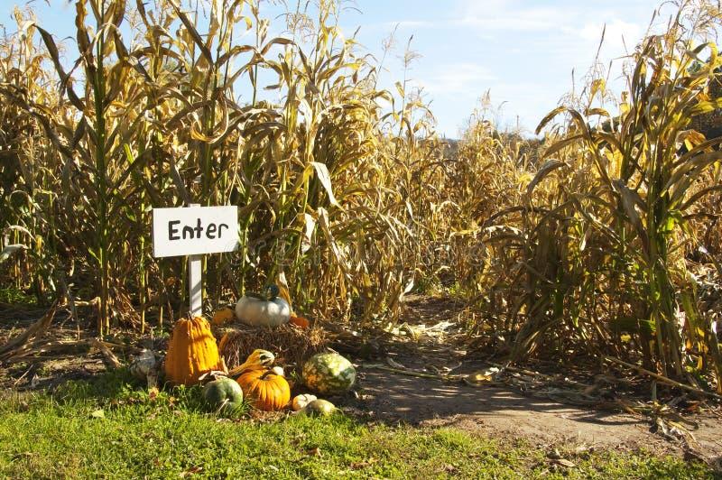 Labyrinthe de maïs photo stock