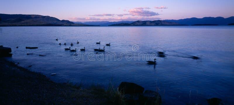 lac à tête plate photo libre de droits