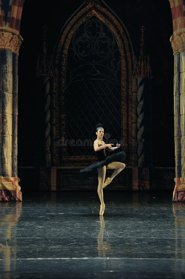 Lac adulte swan de cérémonie-ballet de cygne noir de prince sinistre d'Ogi Lia-The image libre de droits