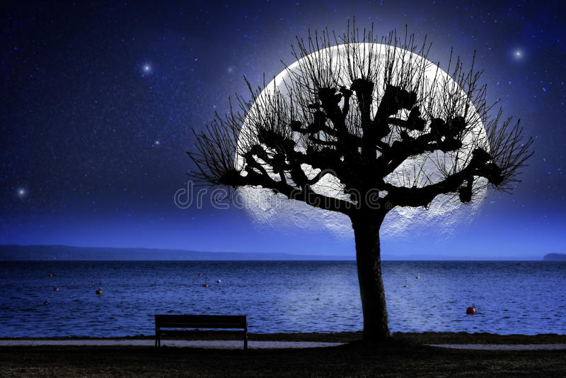 Lac, arbre et lune surdimensionnée photos stock