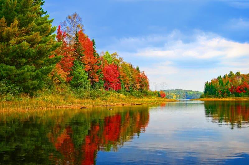 Lac Autumn Shoreline, Quetico, Ontario Quetico photographie stock libre de droits