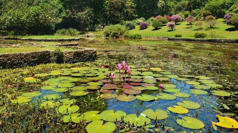Lac avec de beaux nénuphars et variété d'usines et d'arbres photos libres de droits