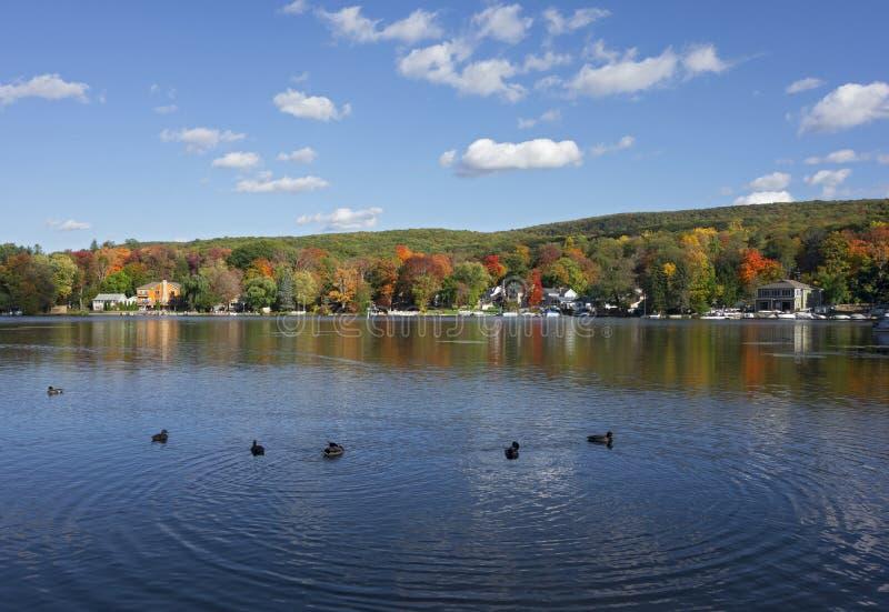 Lac avec des canards en automne image stock