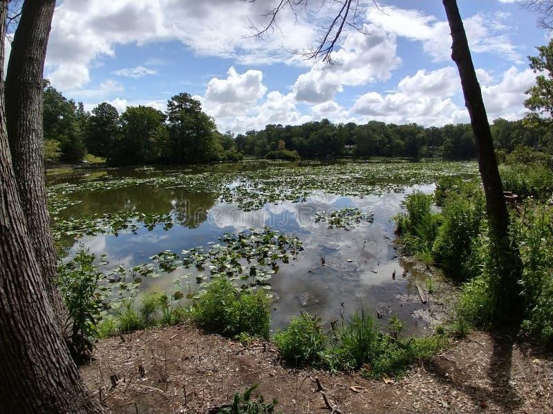 Lac avec des coussins Lily en Virginie image stock