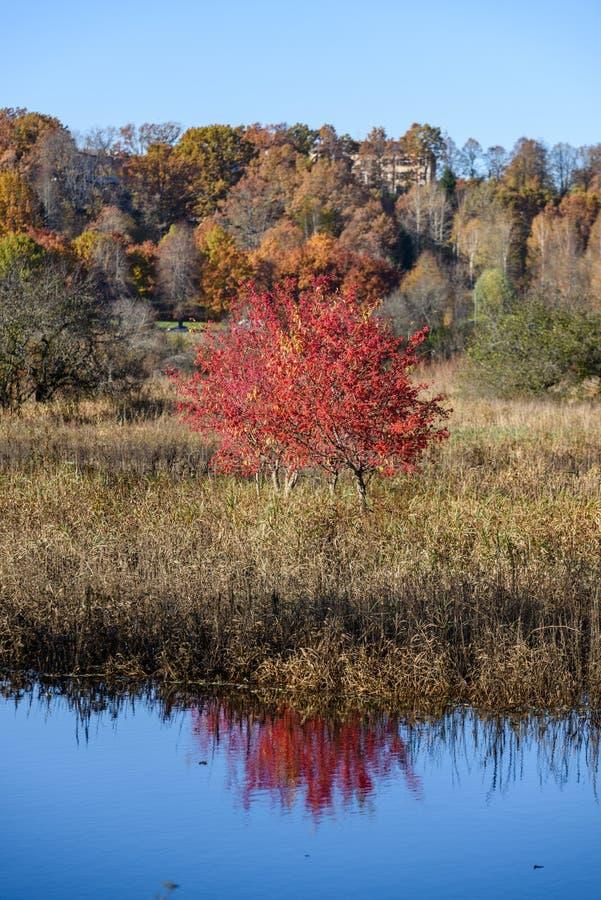 lac avec des réflexions de l'eau dans le jour coloré d'automne avec coloré images libres de droits