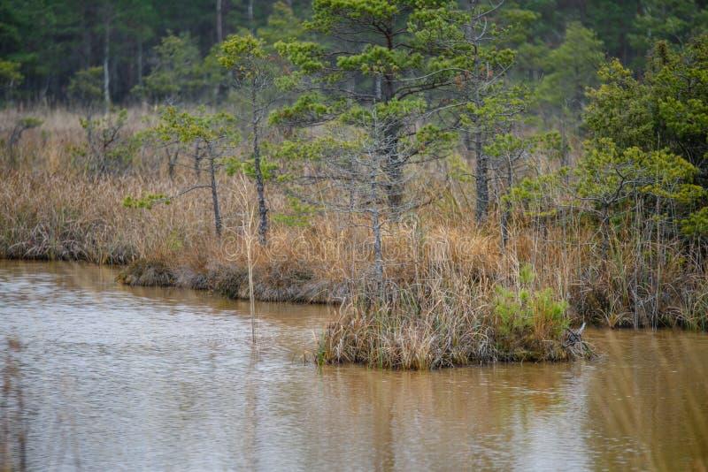 lac avec des réflexions de l'eau dans le jour coloré d'automne images libres de droits
