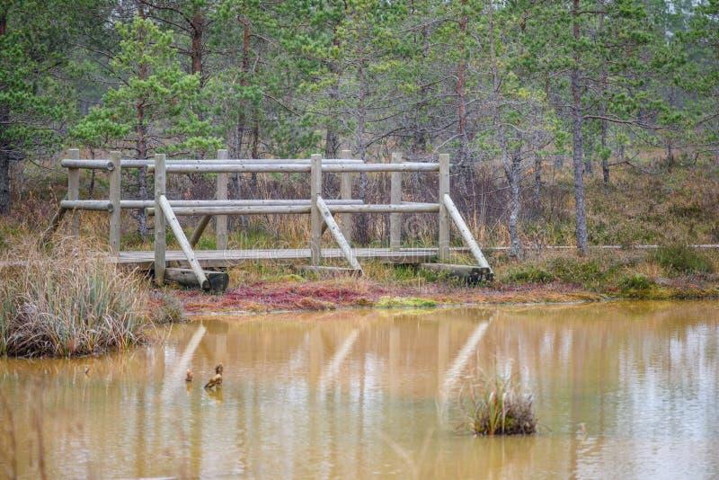 lac avec des réflexions de l'eau dans le jour coloré d'automne images stock