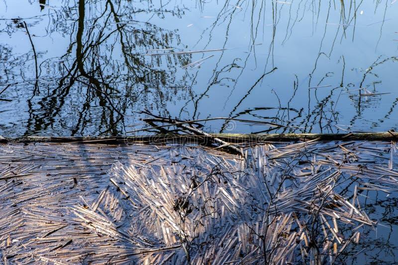 Lac avec les roseaux de décomposition photos stock