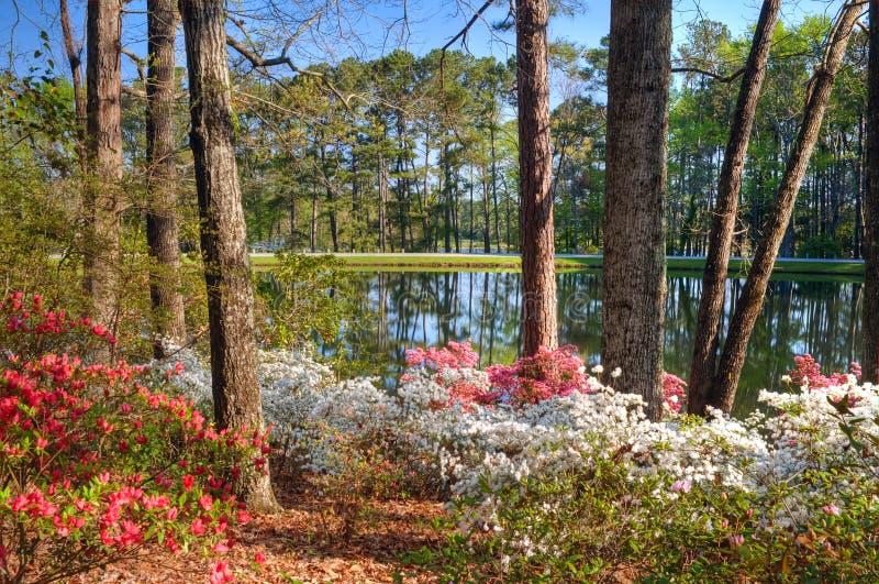 Lac azalea photo stock