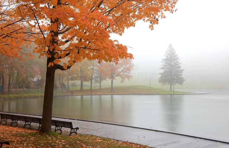 Lac beaver en Mont Royal près de ville de Montréal image stock