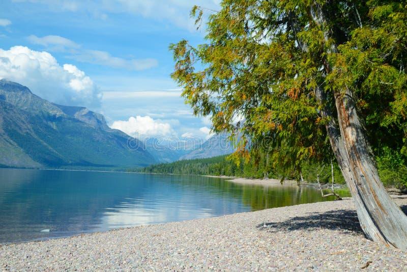 Lac bleu clair entouré avec des forêts photos libres de droits